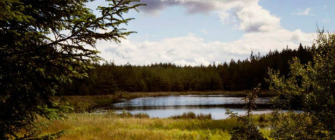 killeter_forest_featured
